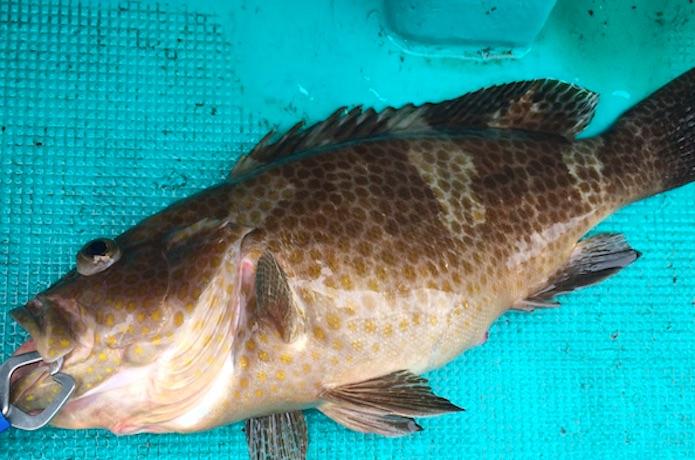 アンダーベイト 根魚