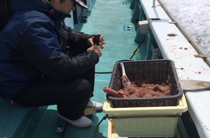 イサキ 釣り方