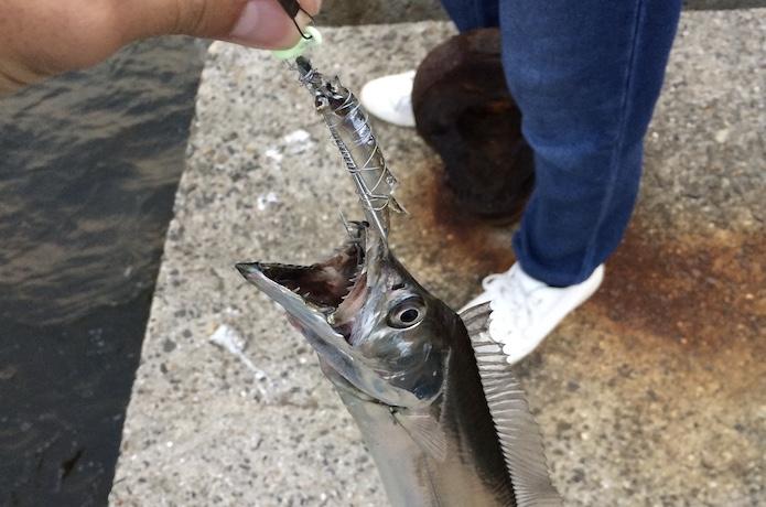 タチウオ 引き釣り 釣り方